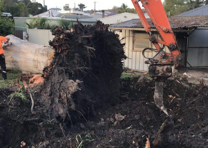 Stump removal - Tree Removal - Earthmoving Newcastle - Blackrock Earthmoving & Haulage